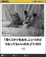 [お題]from:とらをさん